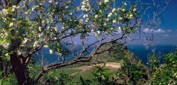 natura2009.jpg
